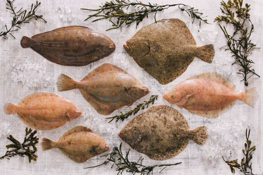 Flat fish range of products from Fal fish