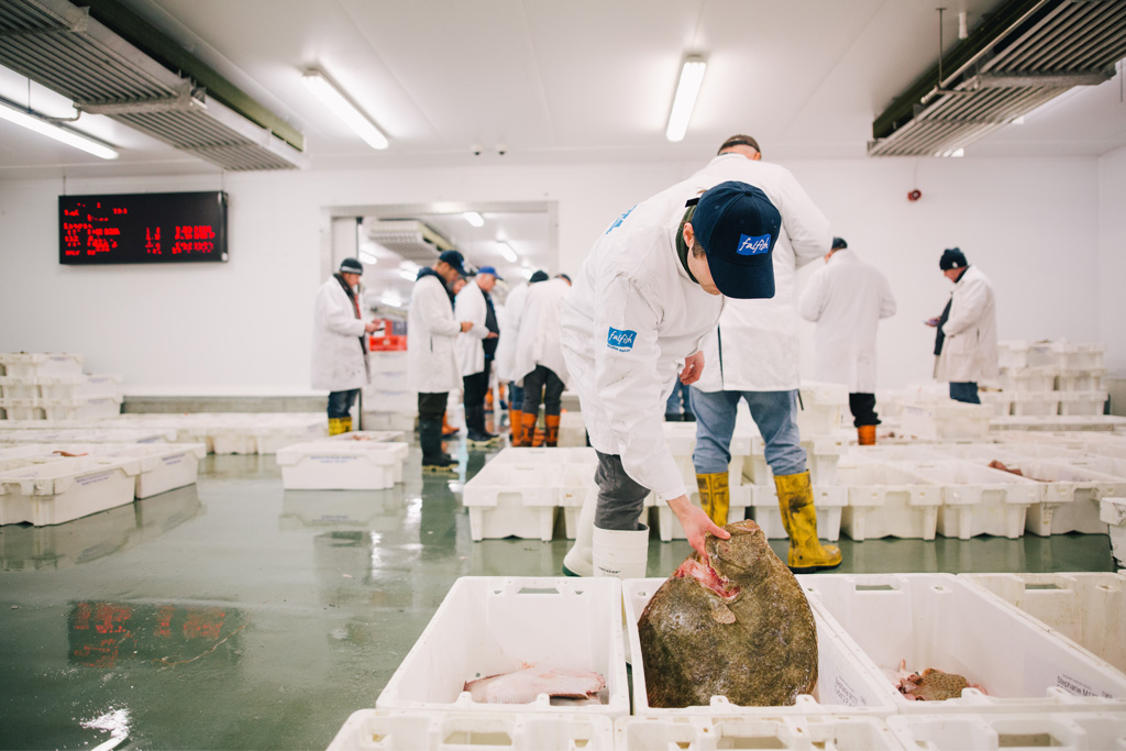 Fal Fish team checking fish at Brixham fish market
