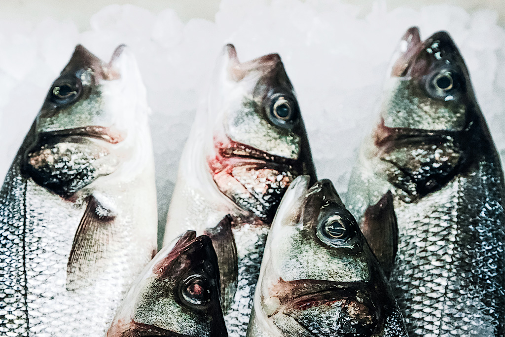 farmed bass stock image