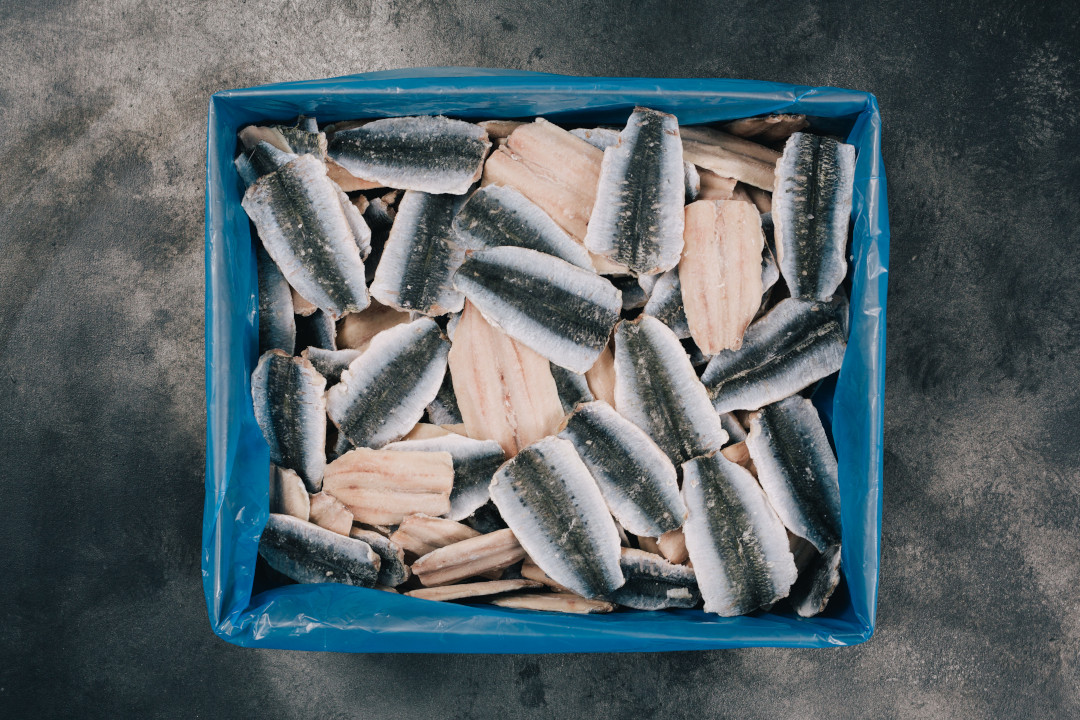 MSC Sardine fillet bulk